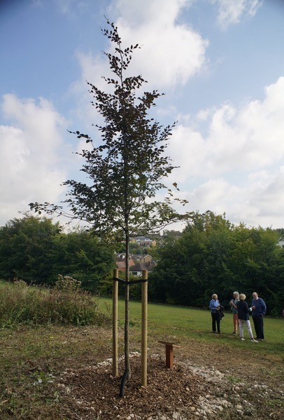Tree planting in Hove, East Sussex