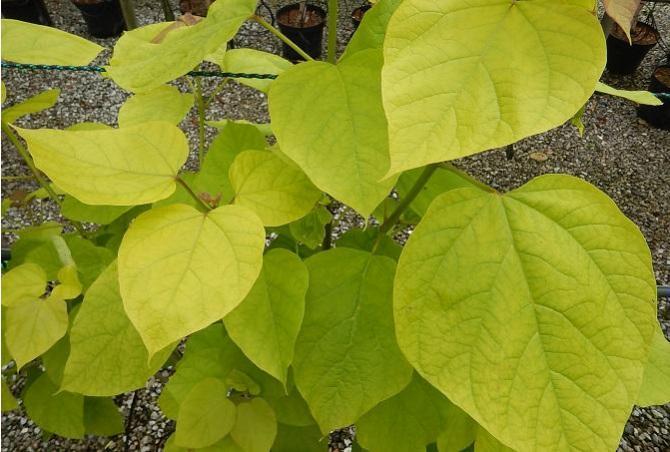 summer foliage colour