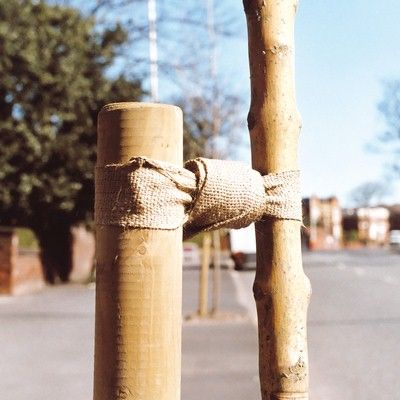 Hessian Tree Tie-30m roll x 50mm