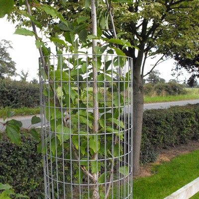 Weldmesh Steel Tree Guards-180cm x 300mm diameter