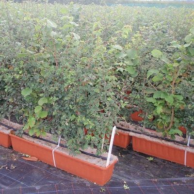 Mixed Instant Hedge
